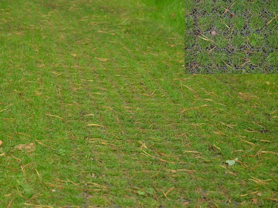 wzmocniony trawnik